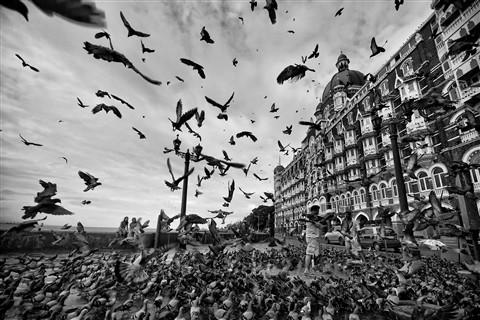 [32] Birds ofFreedom